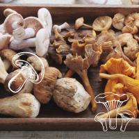 Sklep z grzybami - grzyby marynowane, świeże i suszone - Zakupyw24h.pl