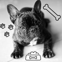 Karma dla psa - jedzenie i przysmaki dla psów zarówno małych i dużych ras - Zakupyw24h.pl